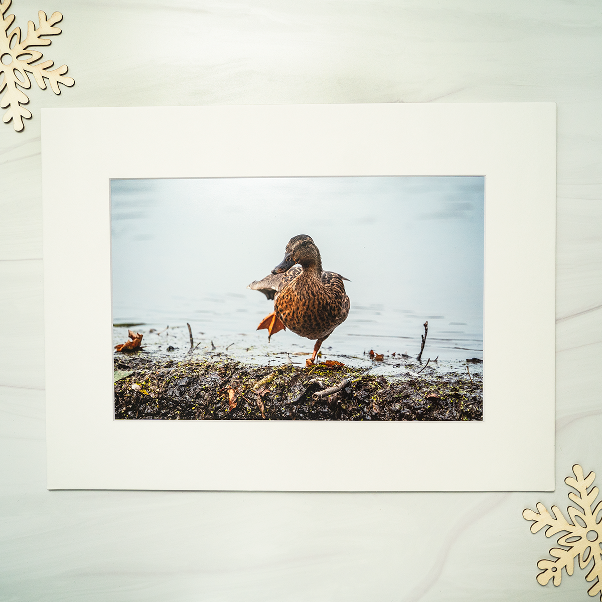 The Dance Photograph by Garett Southerton part of the Water Birds Collection