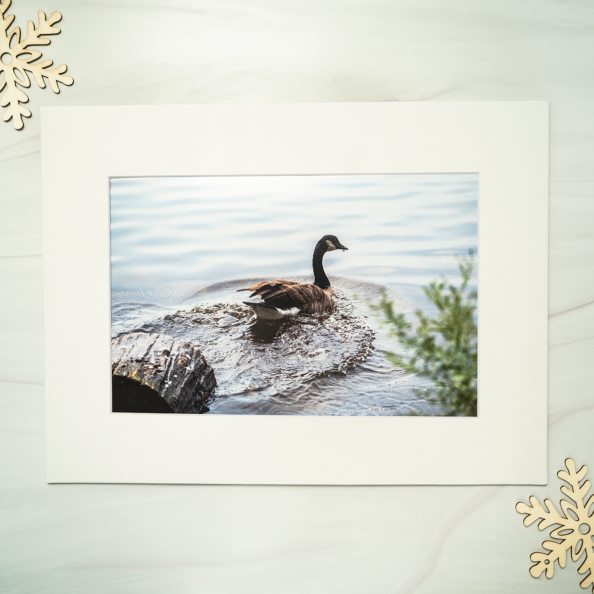 The Push Off Photograph by Garett Southerton part of the Water Birds Collection